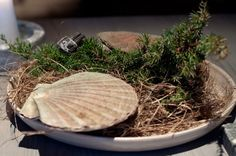 """Scallop """"skalet ur elden"""" cooked over burning juniper branches.  The best scallop of my life: Pure, juicy and stunning flavour.  Restaurant Fäviken Magasinet, SE"""