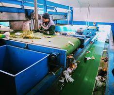 Ce se întâmplă la o stație de sortare a deșeurilor? / What happens to a waste sorting facility? – Corina Eco Basketball Court, Fair Grounds, Urban, Travel, Blog, Viajes, Destinations, Blogging, Traveling