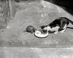 Katze und Schildkröte speisen gemeinsam ...