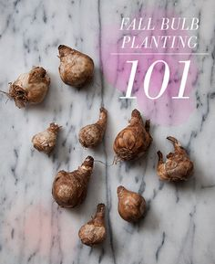 Design*Sponge | Bulb Planting 101 (everything you need to know about getting ready for Spring flowers, from the team at Sprout Home Brooklyn!)