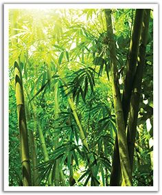 JP London Peel and Stick Removable Wall Decal Sticker Mural, Wild Bamboo Zen Forest, 19.75 by 24-Inch JP London http://www.amazon.com/dp/B00NMX87ZM/ref=cm_sw_r_pi_dp_UDGIvb00X6CAX