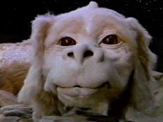 Falkor......I love this movie!