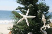 """""""And they beheld the star...."""""""