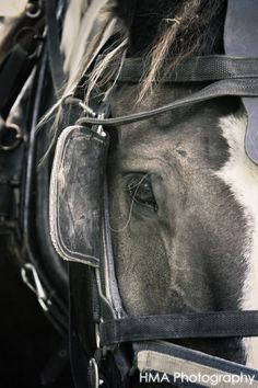 LOVE LOVE LOVE this! What a lovely eye. Dramatic photography, when my photographs look as good as this I will be happy Big Horses, Work Horses, Horse Love, Black Horses, All The Pretty Horses, Beautiful Horses, Animals Beautiful, Beautiful Creatures, Dramatic Photography