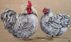 coq et poule gris