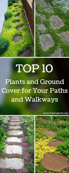Flower Garden Paths and walkways are an integral part of every garden. They allow you to get from one place to another easily in order to maintain the garden. - TOP 10 Plants and Ground Cover for Your Paths and Walkways Lawn And Garden, Garden Paths, Easy Garden, Herb Garden, Mailbox Garden, Spiral Garden, Pebble Garden, Garden Grass, Garden Deco