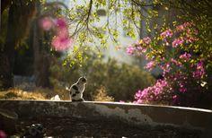 cat-spring