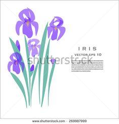 IRIS - Flower Vector Illustration on white background #iris #flower #vector #stock