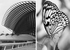 Nature provides a blue print to modern design – illustrated so brilliantly here by French born, German based Architect/Photographer Laurence Ciclet. No surprise really that natural structures that stand the test of time can provide the same engineering stability and architectural sophistication when replicated…. and Ciclet certainly has a spot on eye for such comparisons.