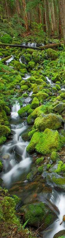 """Dan Sorensen - Photographer  """"Along the trail to Sol Duc Falls in Washington state's Olympic National Park you pass this little gem. This little creek captured more of my attention that Sol Duc! """""""