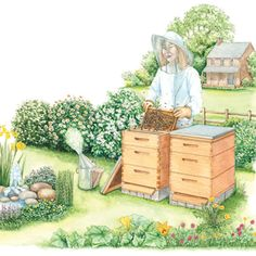 How to Start Beekeeping: What All the Buzz Is About - Homesteading and Livestock - MOTHER EARTH NEWS