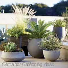 Container Gardening Ideas Container gardening pots - Create a gorgeous outdoor area with our container garden ideas. See the three essential elements for container gardening. Outdoor Planters, Garden Planters, Outdoor Gardens, Planter Pots, Potted Garden, Modern Gardens, Patio Plants, Planter Ideas, Concrete Planters