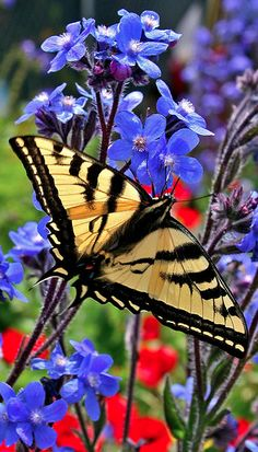 Flutterby • photo: Oakjack on Flickr