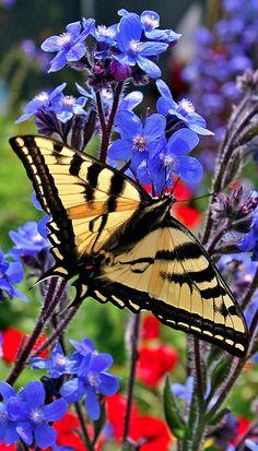 Flutterby • photo: Oakjack on Flickr