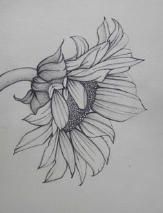 Pencil Art Work Sunflower Mixed Media Original por pencilartwork
