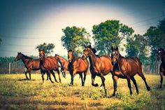 Extremely stunning picture of horse running in the field #horses#horse#horselovers#horselove#lovinghorses#beautifulhorsepictures#horseriding#stunninghorses#beautifulhorses#loveforhorses#stallions#polopony#pony#whitehorses#equestrian#marwarihorse#marwari#thoroughbred#ponies#horsepictures#horsephotography#horsebackriding#LAPOLO Polo Horse, Beautiful Horse Pictures, Pebble Beach Concours, Goodwood Festival, Horse Training, Horse Breeds, Horse Photography, Thoroughbred, Horse Art