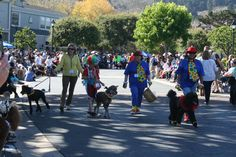 The Clown Crew at Poodle Day 2013 Carmel, CA