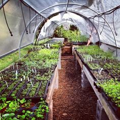 list of vegetables, herbs and fruits you can grow organically all year long in a humid south tropical climate like South Florida