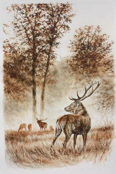 Dominique Pizon Wildlife Paintings, Wildlife Art, Animal Paintings, Animal Drawings, Art Drawings, Deer Sketch, Hirsch Tattoo, Color Pencil Sketch, Natur Tattoos