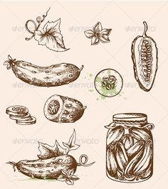 Realistic Graphic DOWNLOAD (.ai, .psd) :: http://vector-graphic.de/pinterest-itmid-1006038607i.html ... Vintage Vector Cucumbers ...  cucumber, design, drawing, food, fresh, green, icon, leaf, old, pickled, retro, sliced, vector, vegetable, vegetarian, vintage  ... Realistic Photo Graphic Print Obejct Business Web Elements Illustration Design Templates ... DOWNLOAD :: http://vector-graphic.de/pinterest-itmid-1006038607i.html