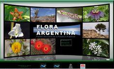 ARGENTINA FLORA  | naturaleza top 10 hits flora de la república argentina flora