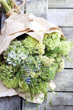 Of Spring and Summer: Floral Media: Flower Agenda - week - Hydrangea Hortensia Hydrangea, Hydrangea Bouquet, Green Hydrangea, Hydrangeas, Pantone Greenery, Deco Floral, Flower Farm, Garden Inspiration, Flower Arrangements