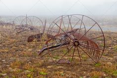 Rustywagonwheel ...  aged, agricultural, agriculture, antique, autumn, country, countryside, cultivate, equipment, farm, farming, farmland, field, fog, grass, green, harvest, historic, historical, history, landscape, machinery, mist, nature, old, outdoor, plow, plowing, red, retro, rural, rusty, seasonal, till, tiller, tilling, vintage, wheel
