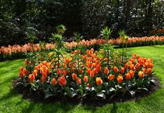 Surely you have often admired impressive flower gardens in parks and squares. And, most likely, you thought it would be impossible to create such a bridal design in your yard or garden. Flower Bed Edging, Flower Beds, Home Flower Arrangements, Parks, Flower Bed Designs, Diy Garden Bed, Garden Stones, House Front, Diy Flowers