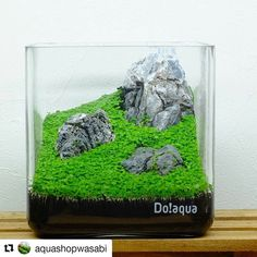 Very Nice cube... by @aquashopwasabi with @repostapp ・・・ 15×15×15㎝ミニ水槽で遊んでみる。 水を張っても張らなくてもインテリアになるのが水草の魅力 キューバパールグラスで山岳風景を再現⛰  #京都#kyoto#aquashopwasabi #aquawasabi #aquarium #natureaquarium #waterplants #plants #greeninterior #interiorgreen #indoorgreen#indoorplants#ada#aquaplants#botanical#aquascape#水草 #水草水槽 #aquascaping #ネイチャーアクアリウム#インテリア#観葉植物#テラリウム#アクアリウム#熱帯魚#コケ#moss#interior#水槽#キューバパールグラス