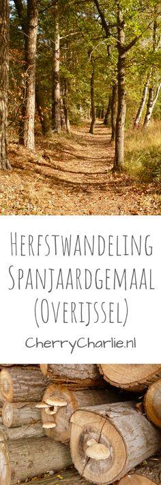Four Seasons, Netherlands, Hiking, File, Data, World, Backpacking, Lifestyle Blog, Plants