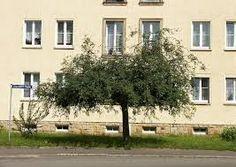 riippapuut, kuten riipparaita, -jalava, -pihlaja tai -herne, ovat kivan muotoisia ja koristeellisia talvellakin. Pysyvät kaikki aika pieninä.