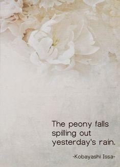 The peony falls spilling out yesterday's rain - Kobayashi Issa