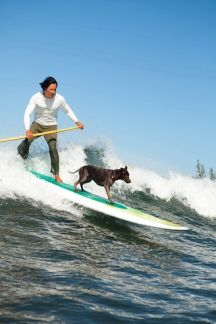 """Kevin Seid of """"Everpaddle SUP"""" takes his Australian Heeler, Weve surfing every week. #SUP"""