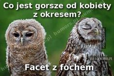 Very interesting post: TOP 36 Animals Pictures.сom lot of interesting things on Funny Animals. Funny Owls, Cute Funny Animals, Owl Pictures, Funny Animal Pictures, Animal Pics, Animals For Kids, Animals And Pets, Wild Animals Photography, The Silent Treatment
