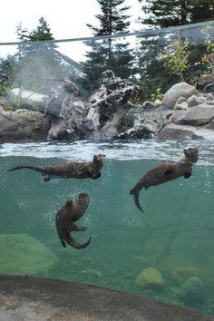 Watershed Heroes, Sequoia Park Zoo, Eureka, Californië, USA by Studio Hanson Roberts