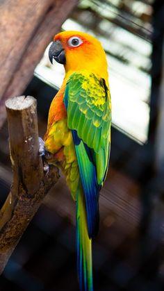 Scarlet Macaw. Ccccccccccooooooooooolllllllllllllllllllllllllll