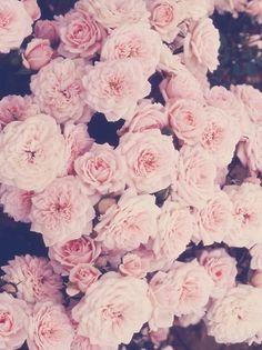 Roses vintage iphone wallpaper