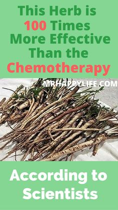Tea from dandelion acts on cells which are affected by cancer and decompose them within 48 hours while any healthy cell in the body is not affected.
