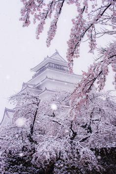 Snow in cherry blossom and  Aizuwakamatsu Castle(Tsuruga Castl), Fukushima, Japan