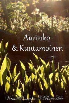RunoTalon voimapuutarha: Voimaruno & voimakortit vko 12 - Aurinko & Kuutamoinen