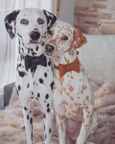 dog learning,dog tips,dog care,teach your dog,dog training Cute Funny Animals, Cute Baby Animals, Funny Dogs, Animals And Pets, Cute Dogs And Puppies, Pet Dogs, Dog Cat, Doggies, Beautiful Dogs