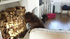 Checking whether we've got enough logs to get through the winter ...