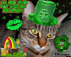 im not Irish  MeWseeee and Nutter One is me btw ;)