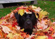 I will just sit here with leaves on my head...because I love you!