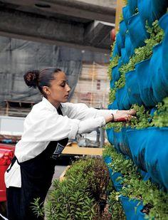 Urban Farming at the Homegirl Cafe | Garden Design