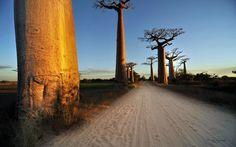2560x1600 px Best baobab tree backround by Tyler Leapman for  - pocketfullofgrace.com