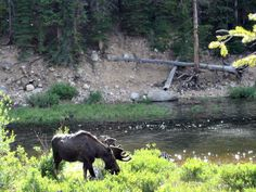 Our Family's Top 5 Colorado Camping Spots     Growing Up Fort CollinsGrowing Up Fort Collins