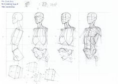 Exceptional Drawing The Human Figure Ideas. Staggering Drawing The Human Figure Ideas. Figure Drawing Tutorial, Male Figure Drawing, Figure Drawing Reference, Anatomy Reference, Drawing Tutorials, Body Anatomy, Anatomy Art, Head Anatomy, Anatomy Sketches