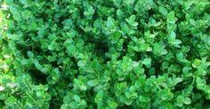 1000+ images about Garden Plants I Like on Pinterest | Florida ...