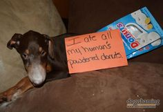 I ate all my human's powder donuts.